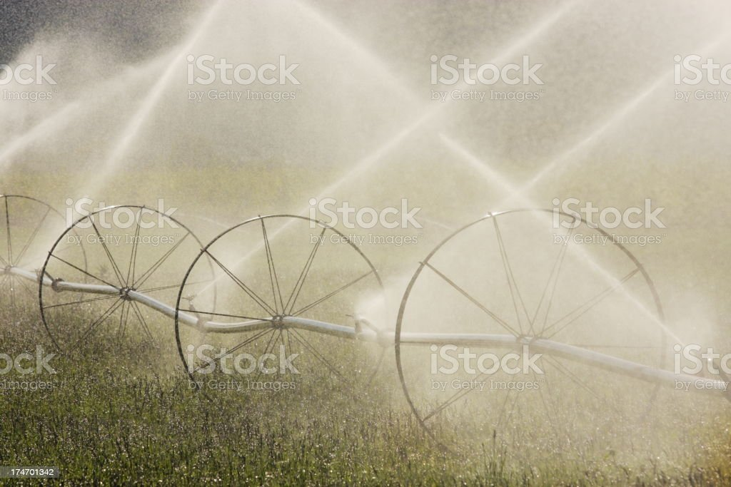 Irrigation Sprinkler Spraying Farm Crop stock photo