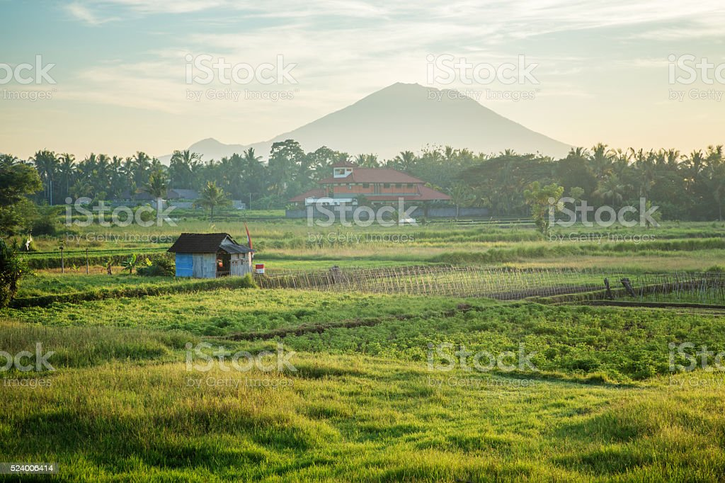 Agricultural vegetable field in Bali Indonesia with volcano background stock photo