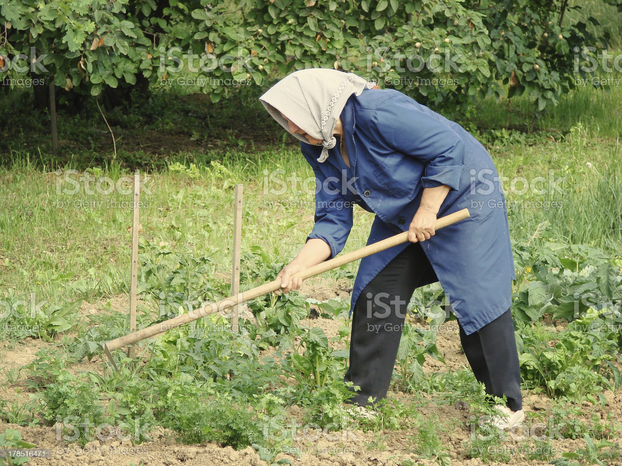 agricultural work royalty-free stock photo