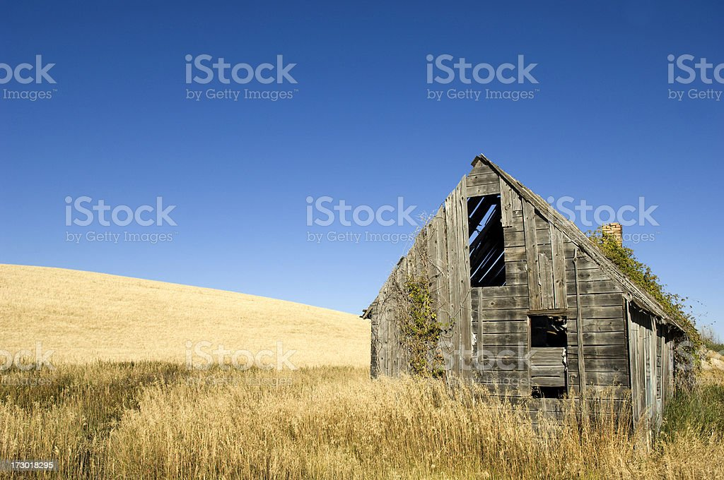 Agriculture and Abandoned Cabin royalty-free stock photo
