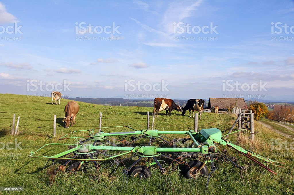 Agriculture and dairy farming in the Allgäu stock photo