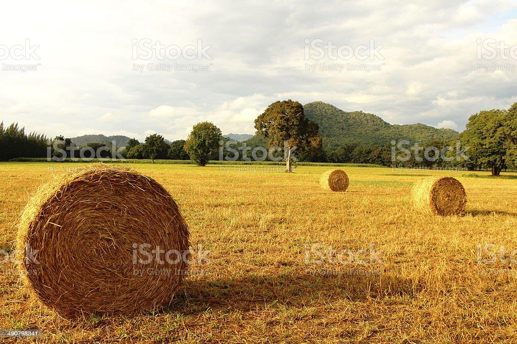 Сельское хозяйство и природа ферма Стоковые фото Стоковая фотография