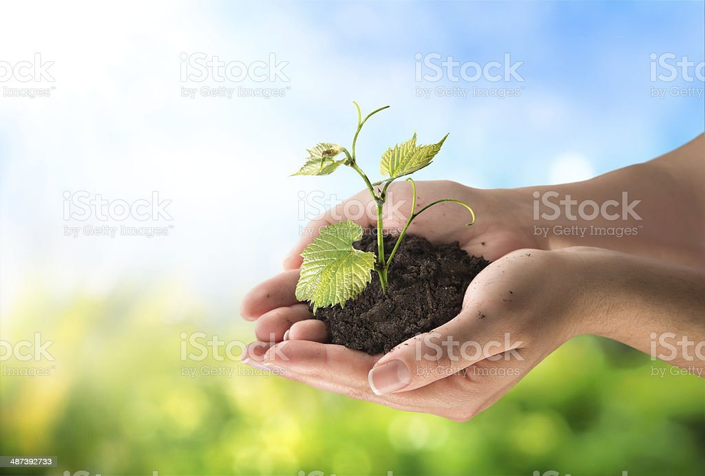 agriculture and new life concept stock photo