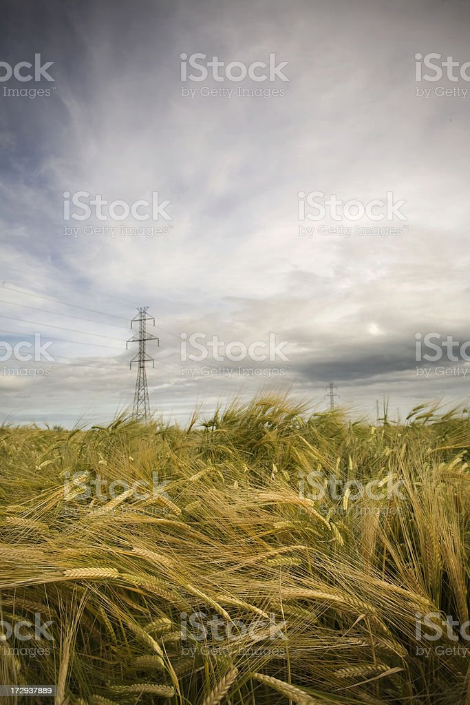 Agriculture and Power stock photo