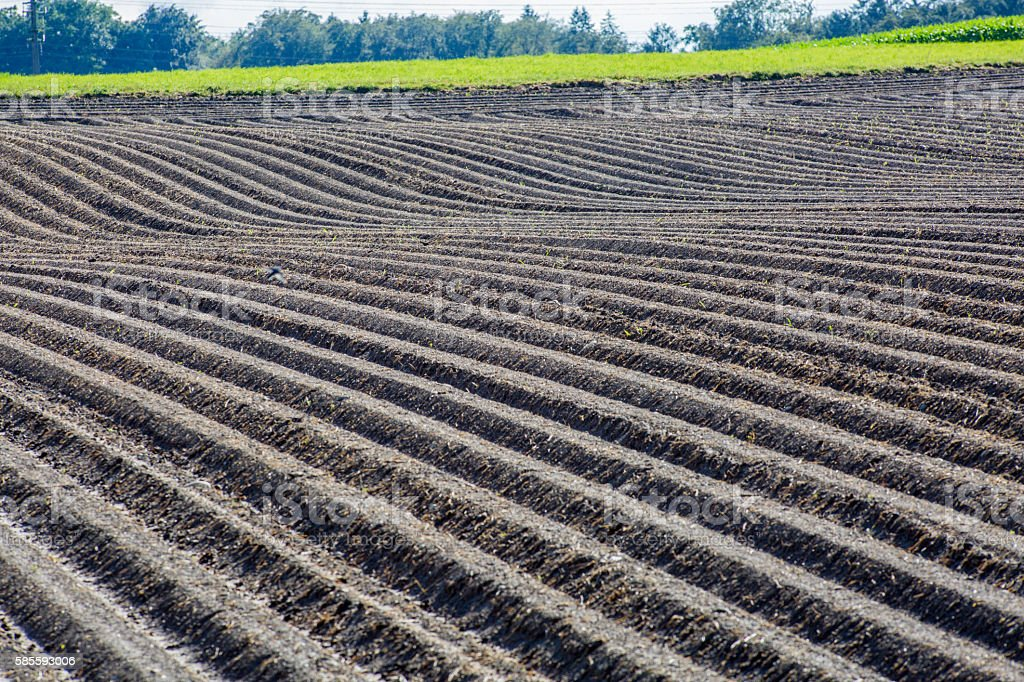 Agriculture brown mud soil field, freshly plowed stock photo