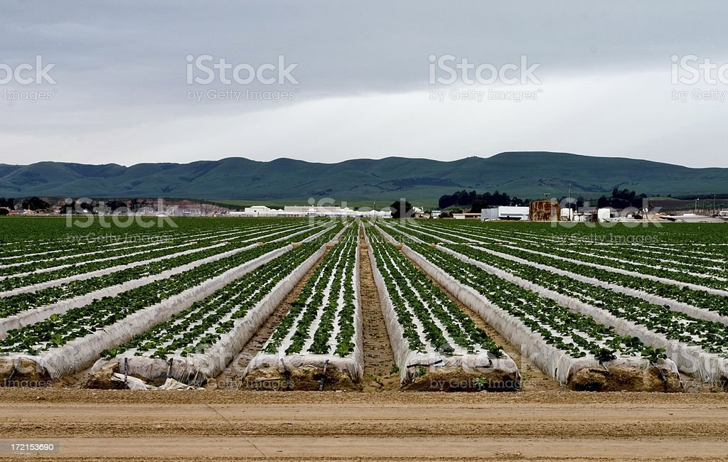 Agriculture  Crop royalty-free stock photo