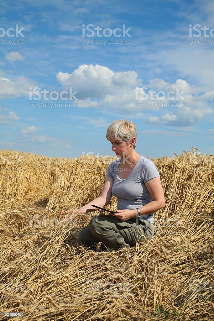 Agriculture, desperate farmer in damaged wheat field stock photo