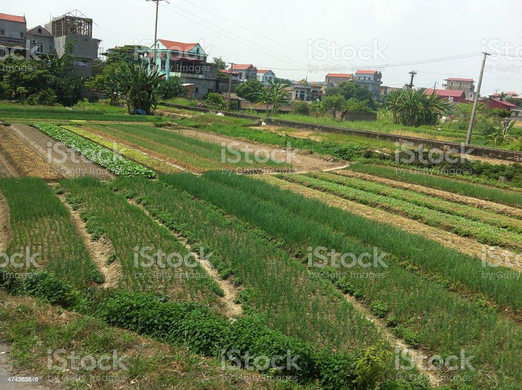 La agricultura farm en Vietnam foto de stock libre de derechos