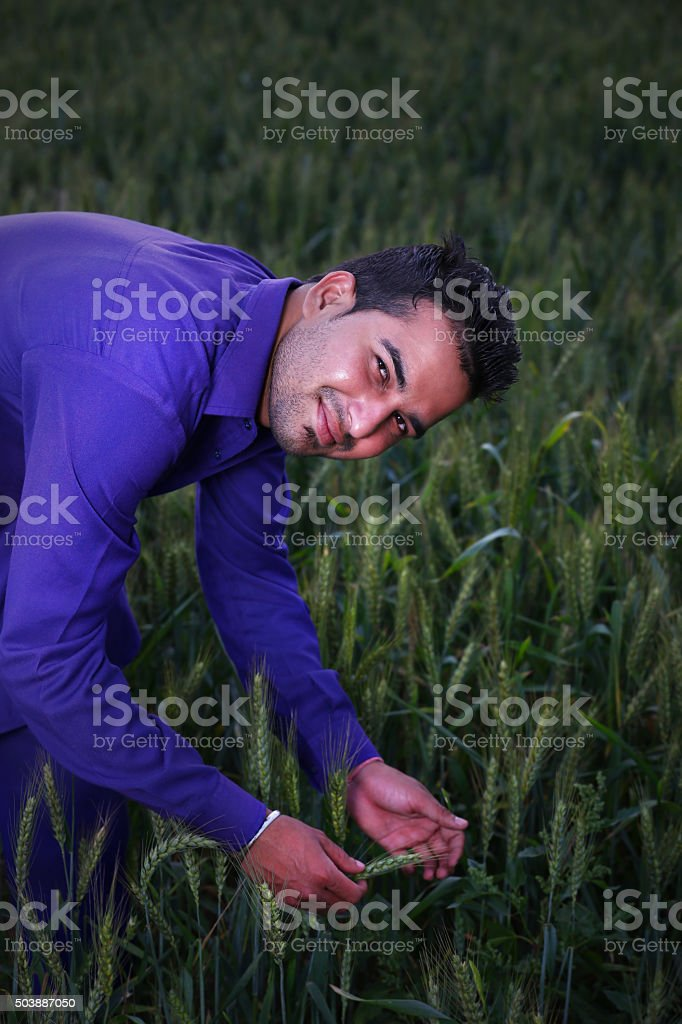 Agriculture: farmer in field checking his wheat stock photo
