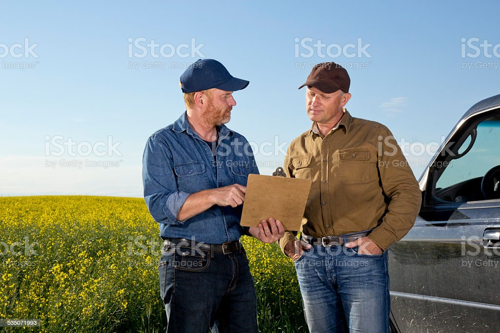 Agriculture Farmers in Colllaboration and Communication at a Canola Farm stock photo