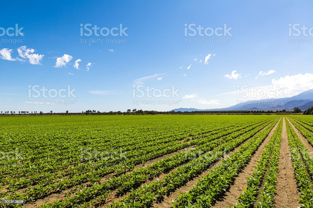 Agriculture Fertile Field of Organic Crops stock photo