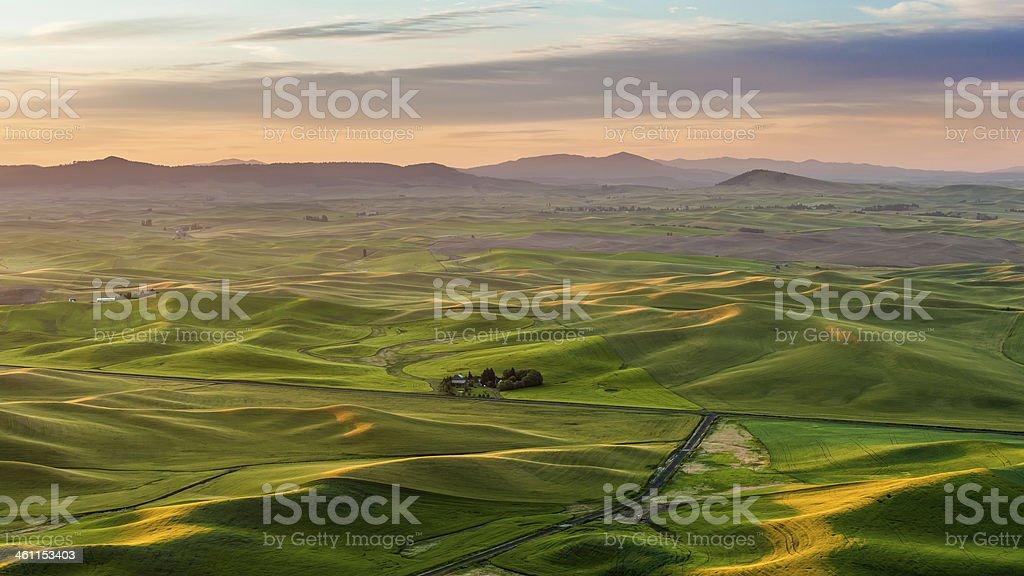 Agriculture field in sunrise, Palouse, WA stock photo