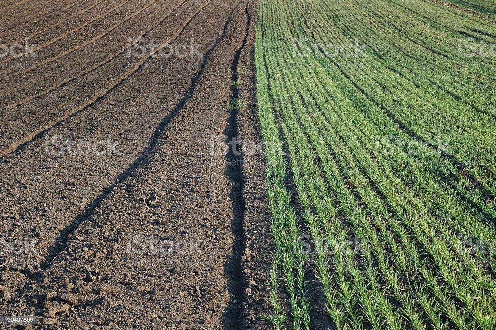 agriculture field royalty-free stock photo