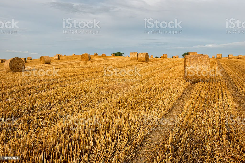 Agriculture , field with straw bales after harvest. Poland stock photo