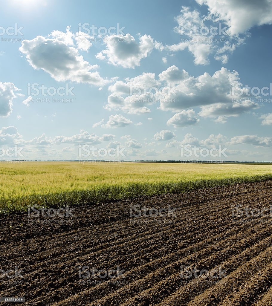 agriculture fields under cloudy sky royalty-free stock photo