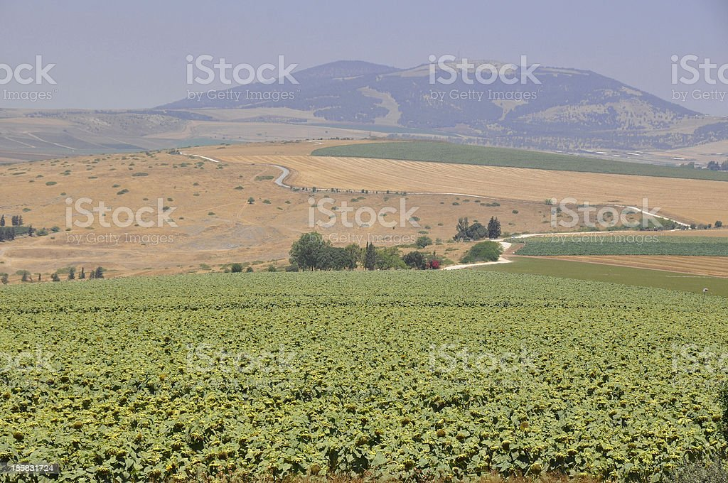 Agriculture in Israel stock photo