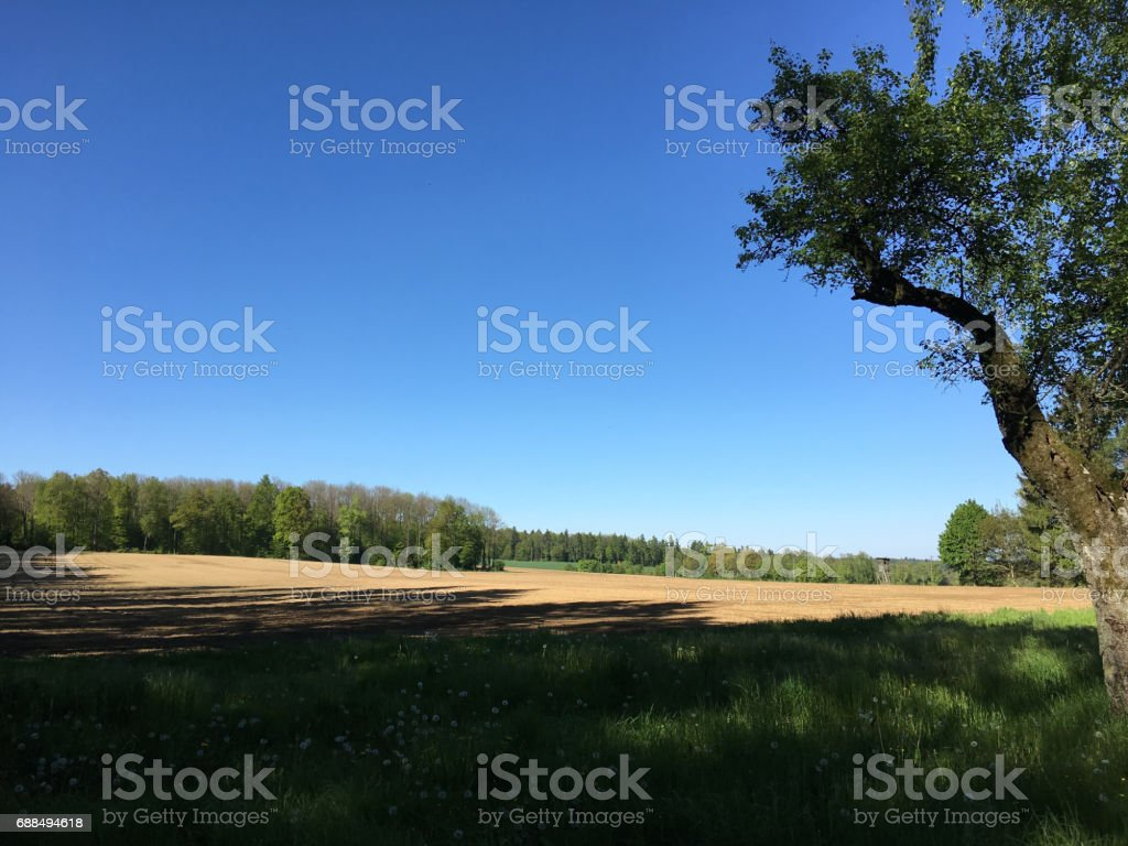 agriculture in spring stock photo