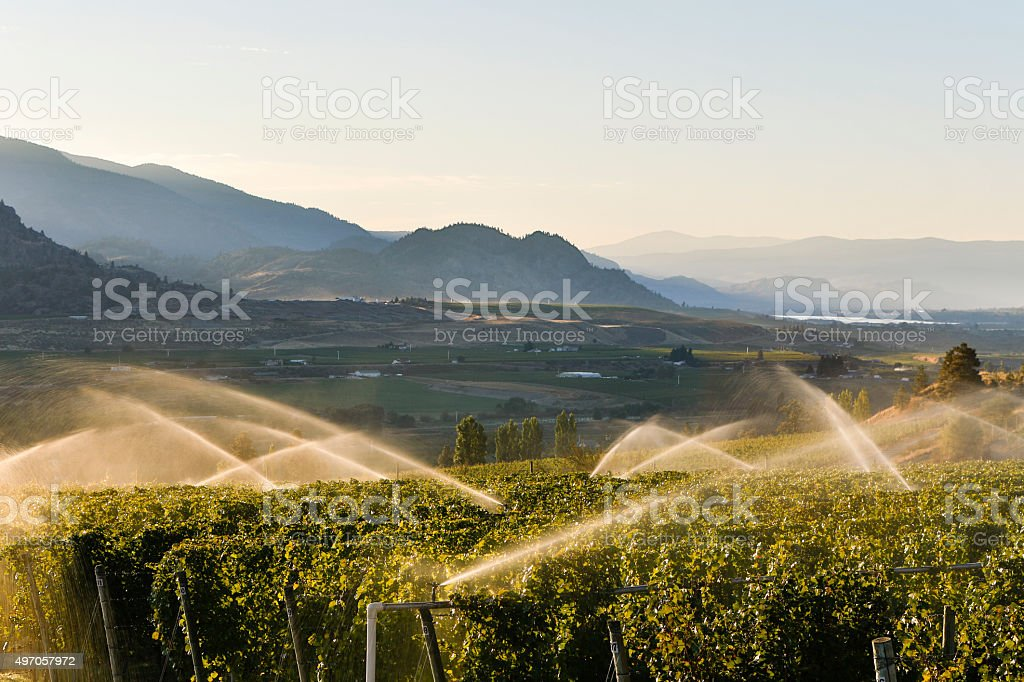 Agriculture Irrigation Sprinkler Okanagan Vineyard stock photo