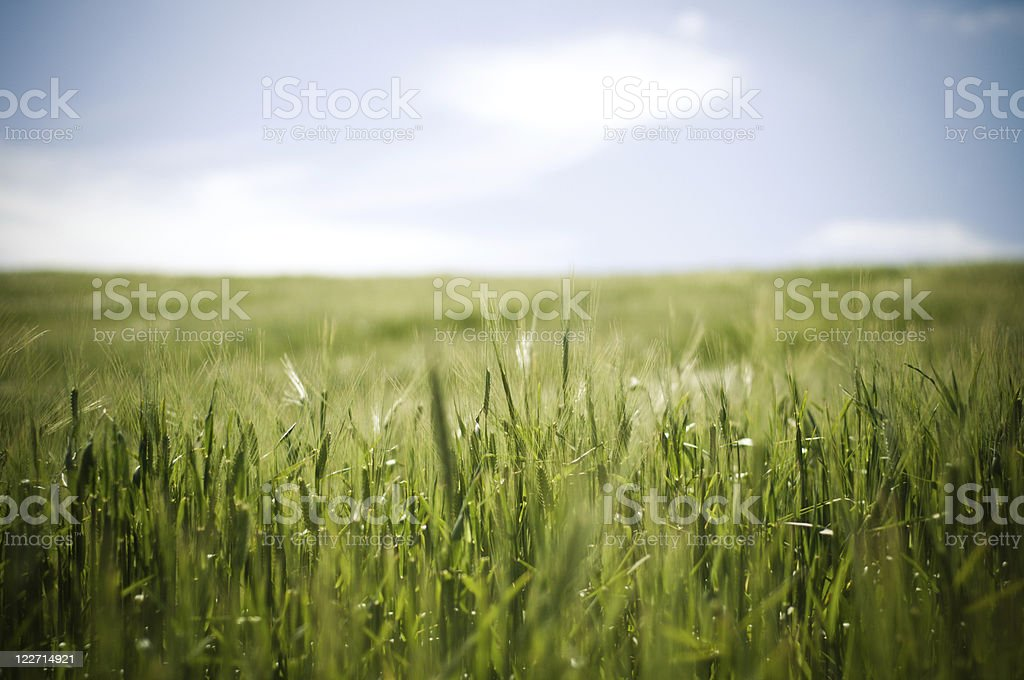 Agriculture landscape in South Africa royalty-free stock photo