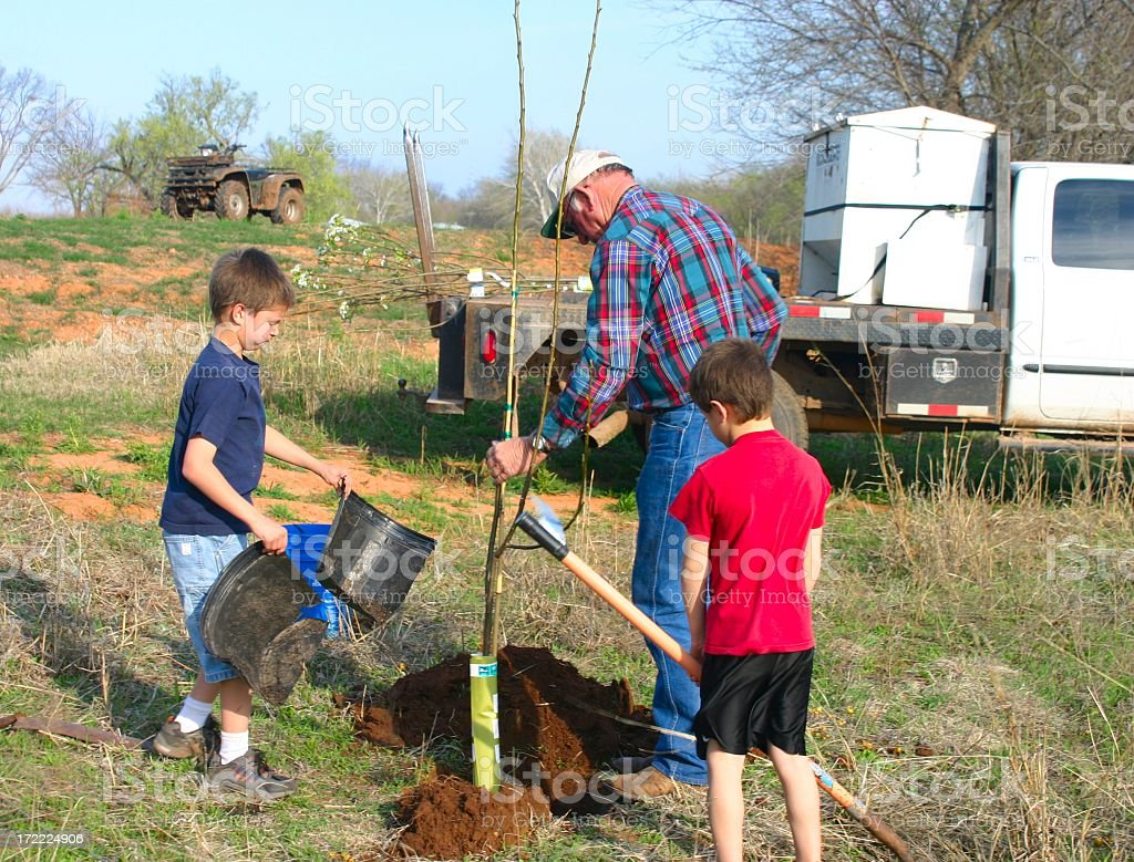 Agriculture: man and boys Planting pear Trees for Wildlife series royalty-free stock photo