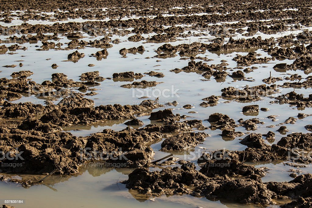 Agriculture mud soil field in a water flood stock photo