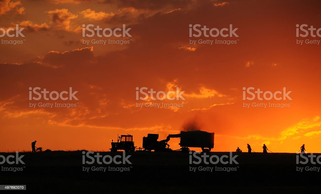 Agriculture Nature And People At Sunset In Turkey stock photo