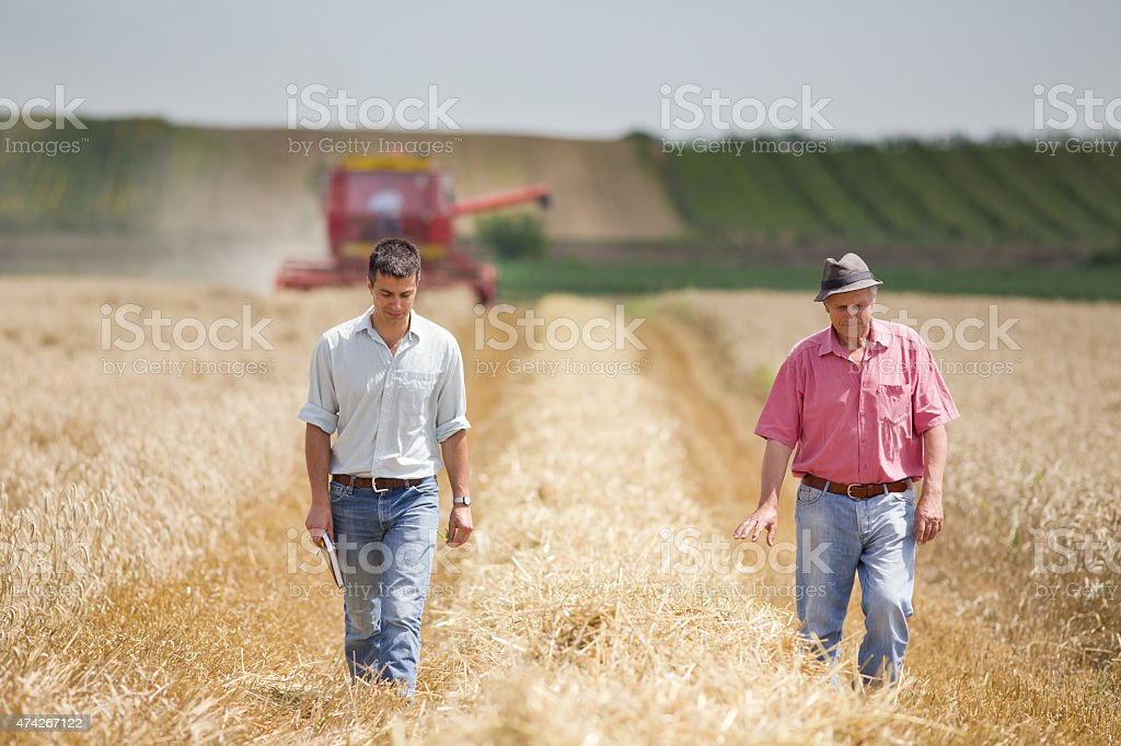 Agriculture partners on wheat harvest stock photo