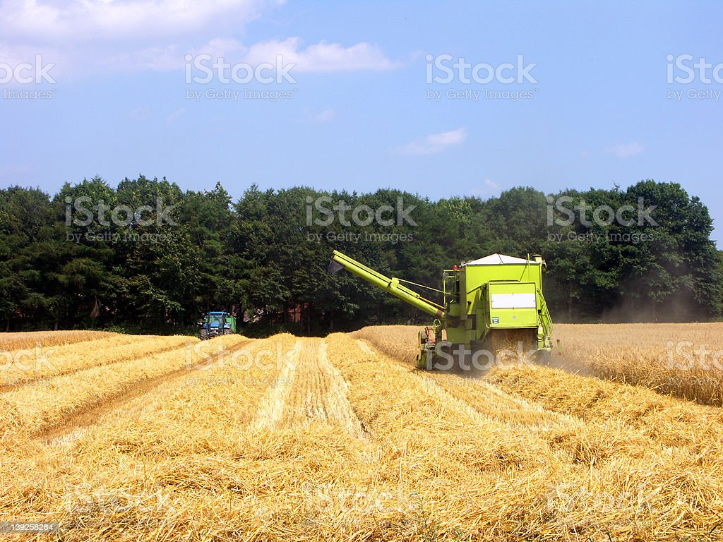Agricultura stock photo