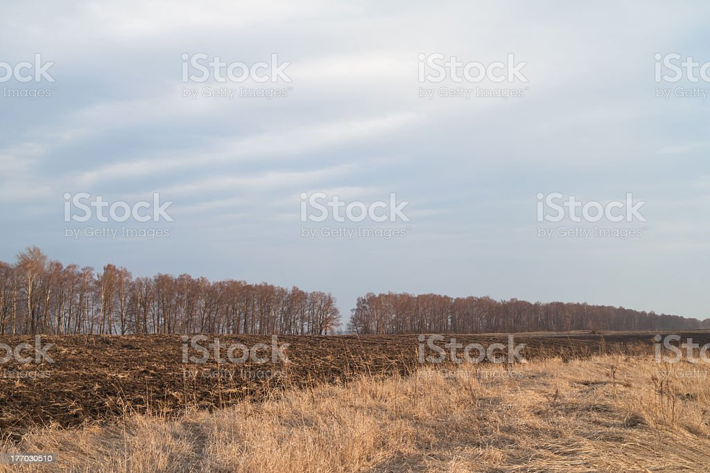 Agriculture. royalty-free stock photo