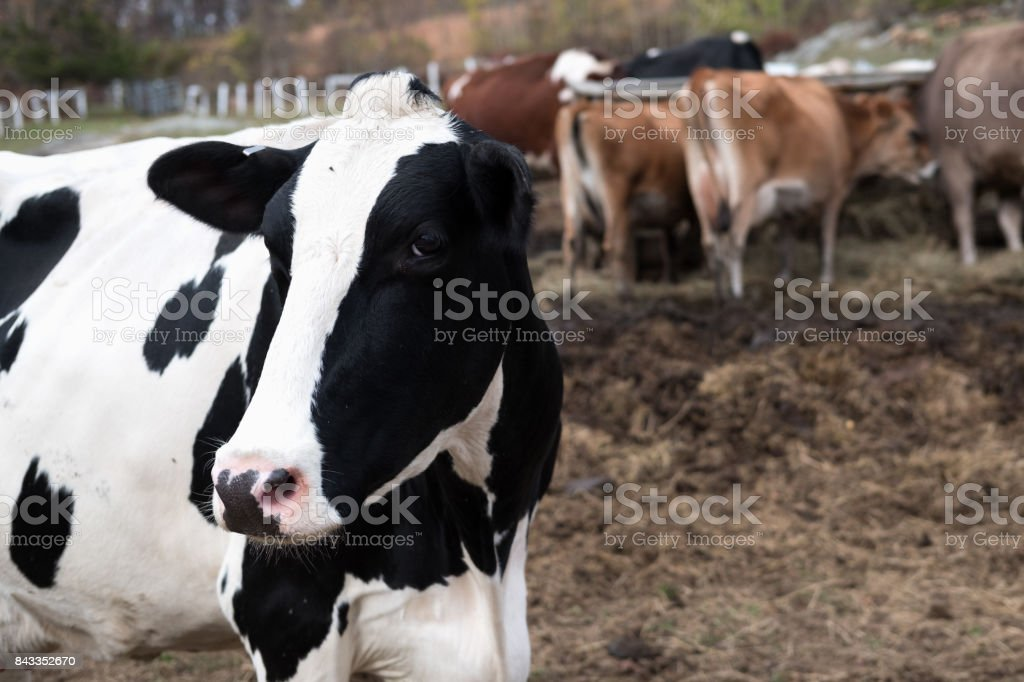 Agriculture Pictures of Farm, New York in Fall stock photo