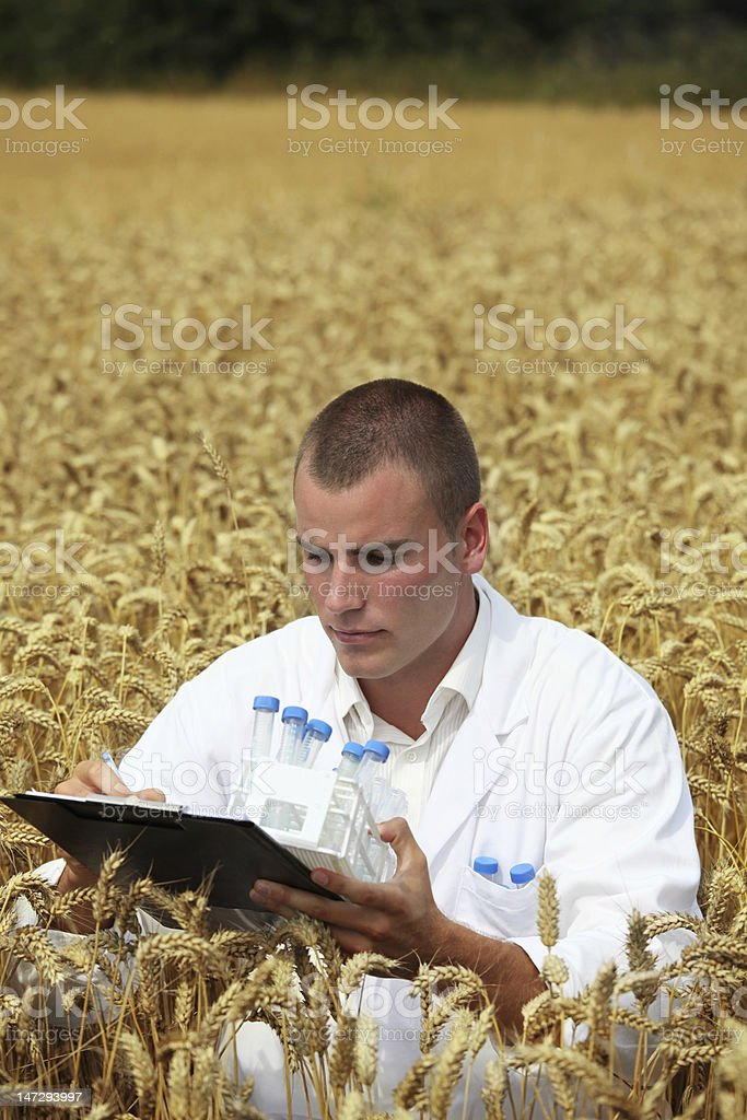 Agriculture scientist analyzing the crop royalty-free stock photo