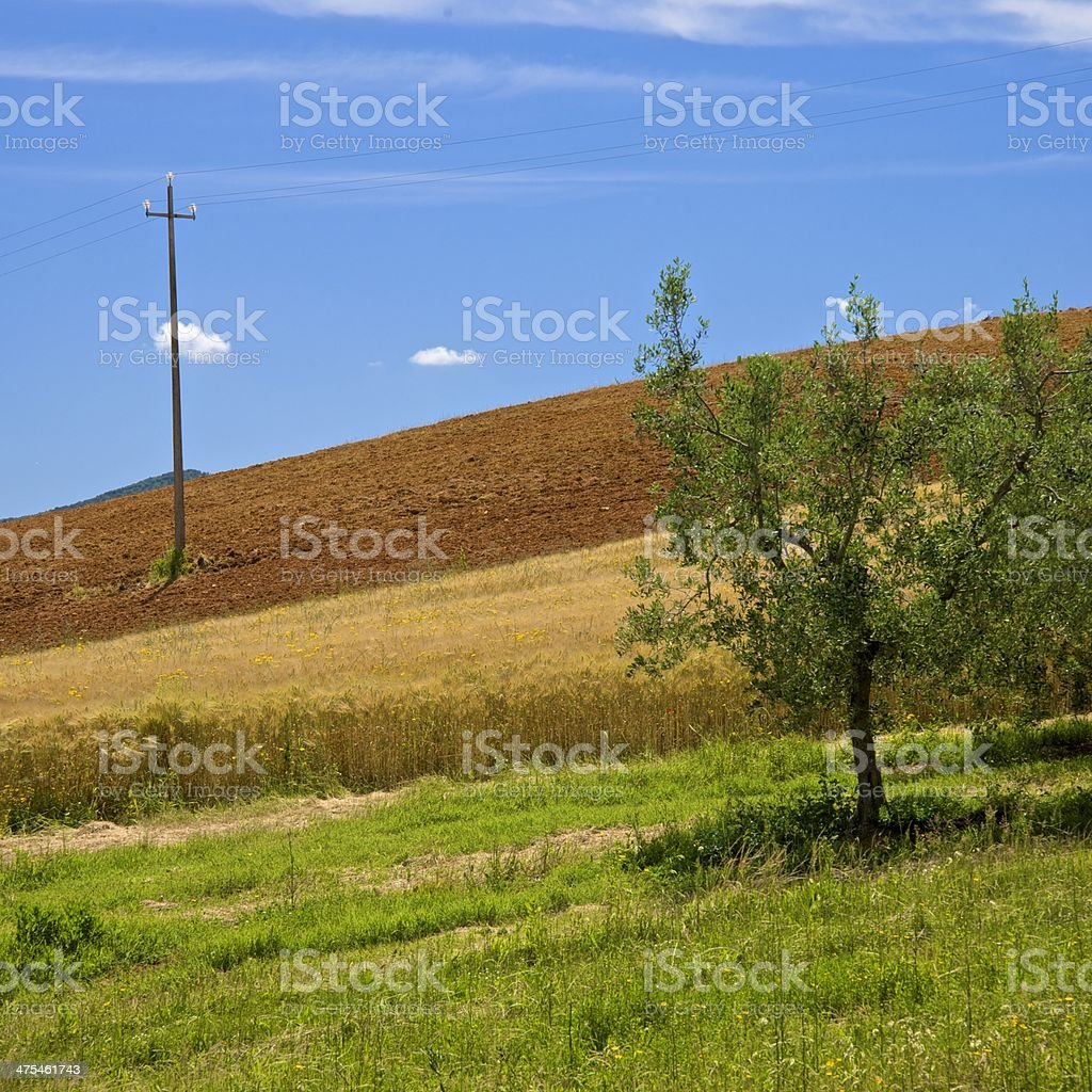 Agriculture variety in Spring - Tuscany, Italy royalty-free stock photo