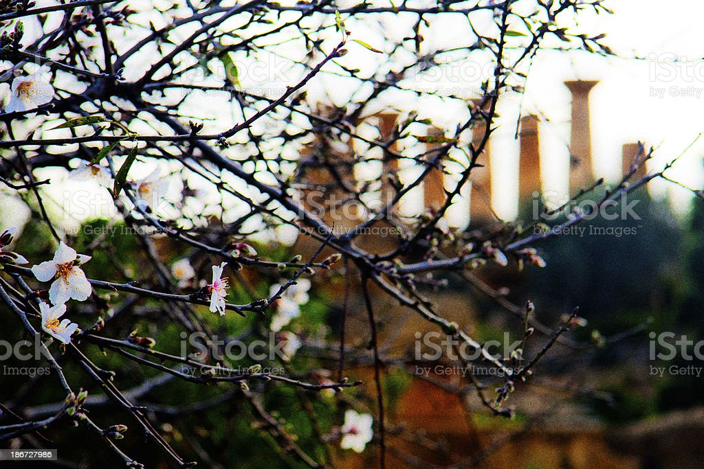 Agrigento - Valle dei Templi stock photo