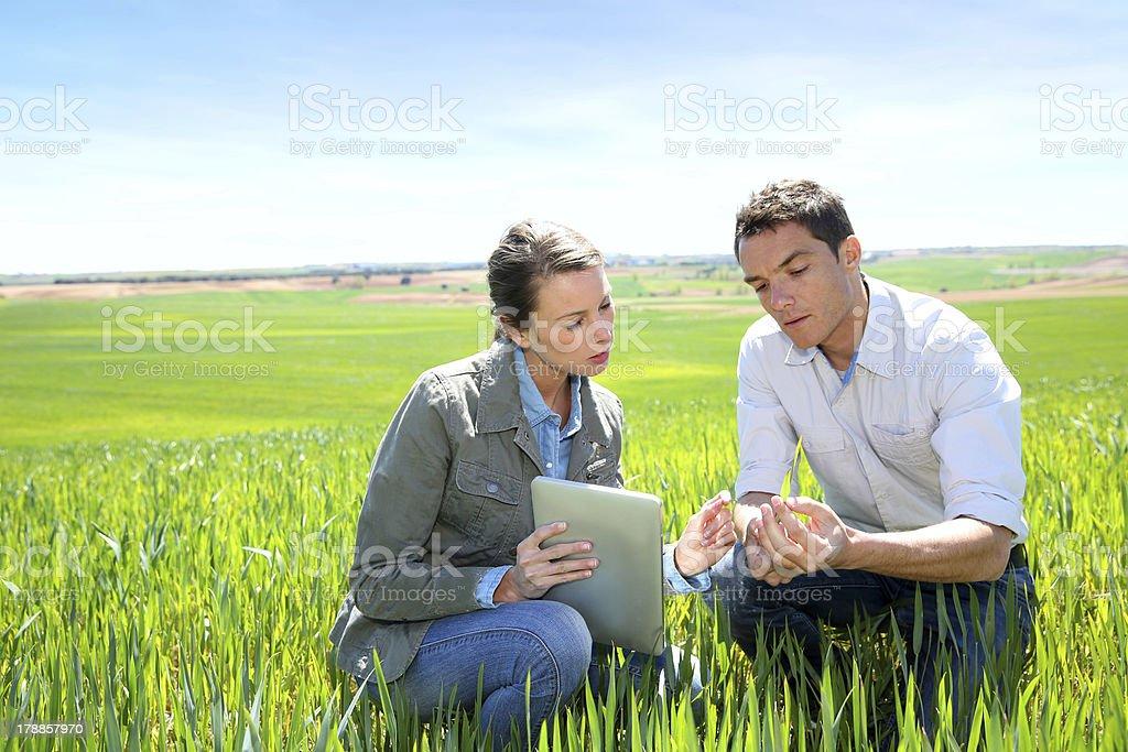 Agronomist with farmer kneeling in wheat field stock photo