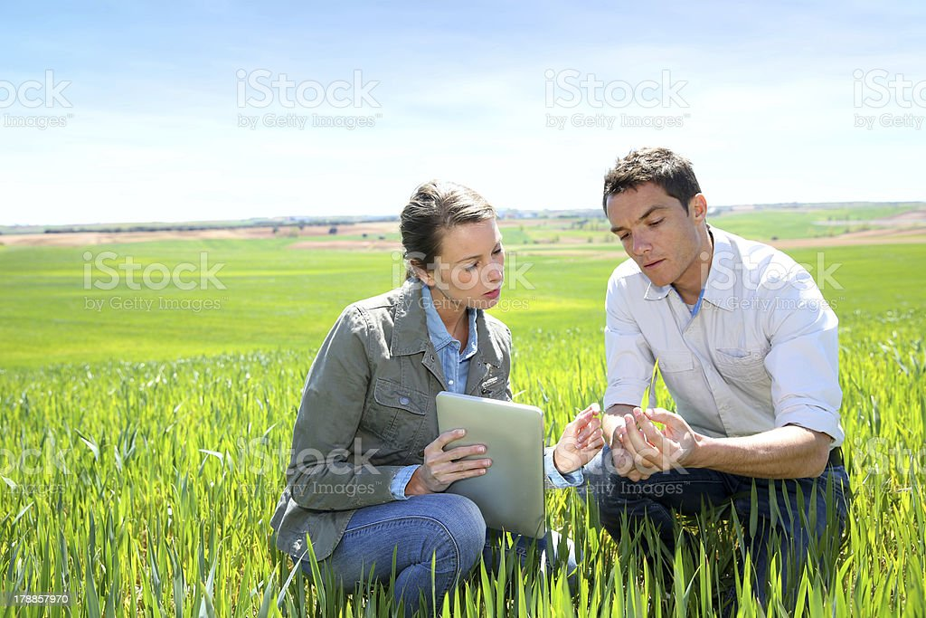 Agronomist with farmer kneeling in wheat field stock photo