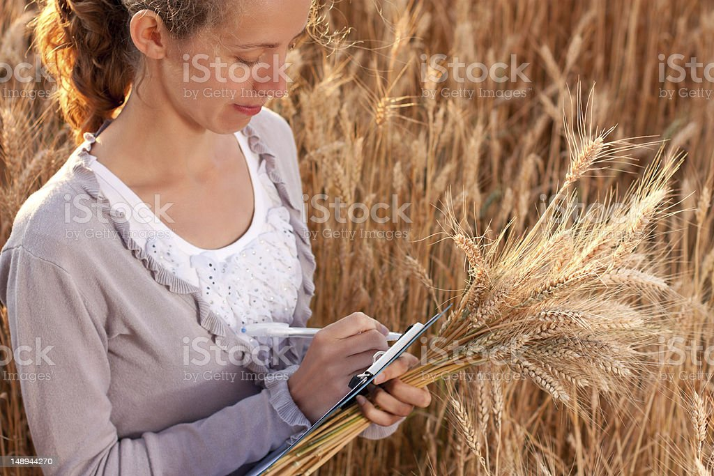 Agronomist writes results of his experiment in the wheat field royalty-free stock photo