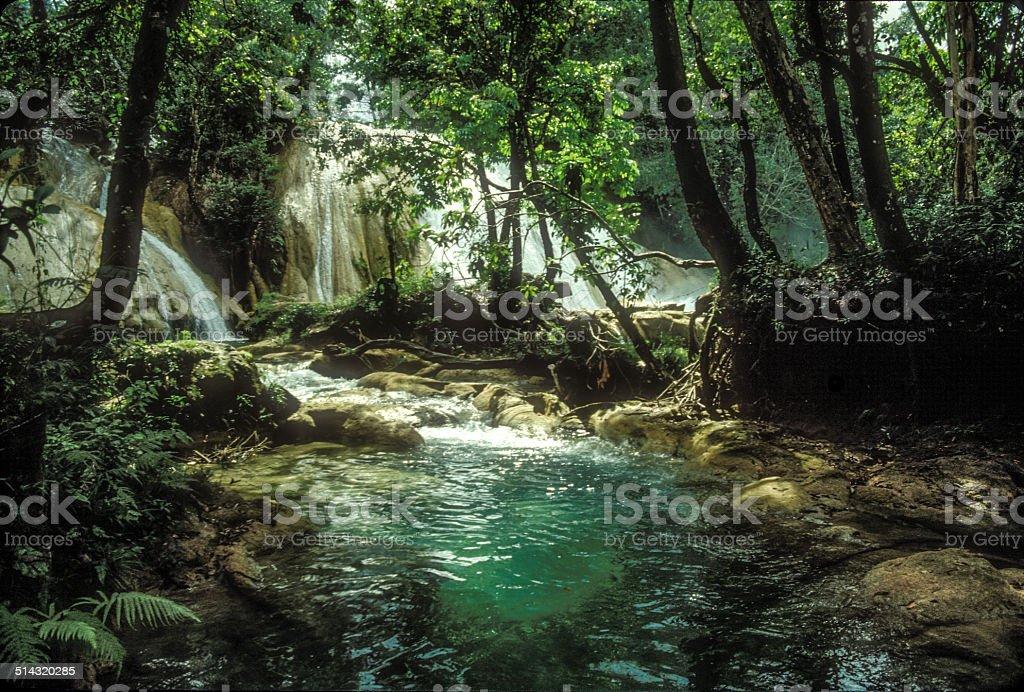 Agua Azul Riparian stock photo
