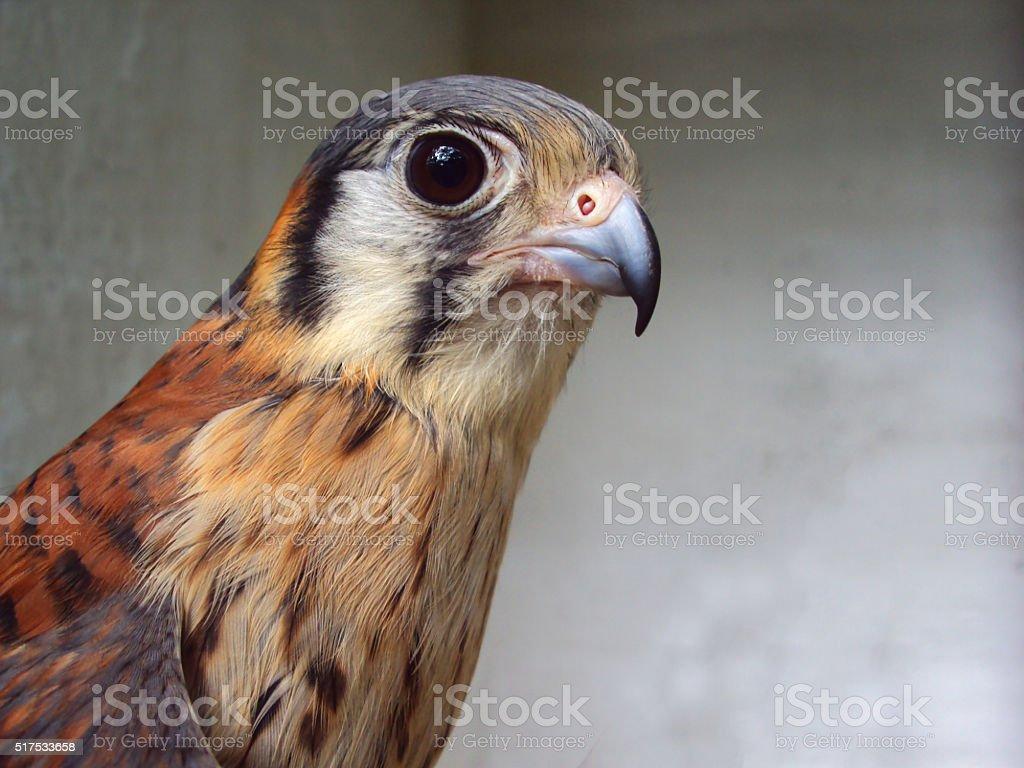 Aguila stock photo