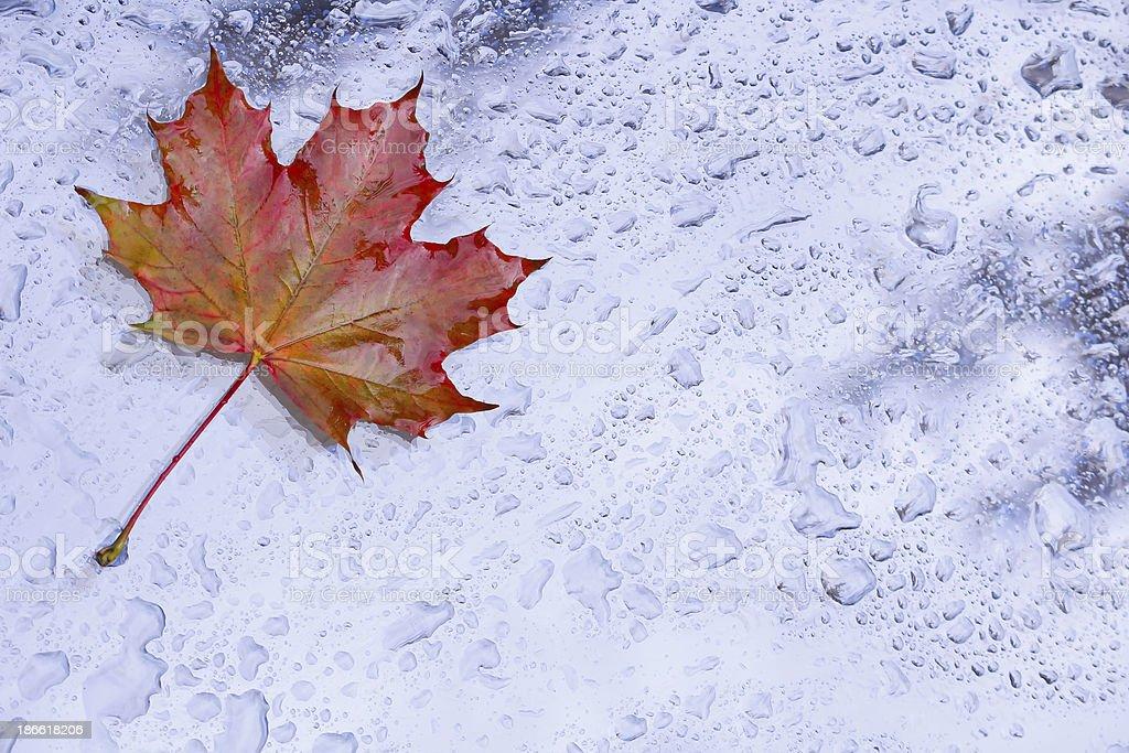 Ahornblatt im Herbstregen stock photo