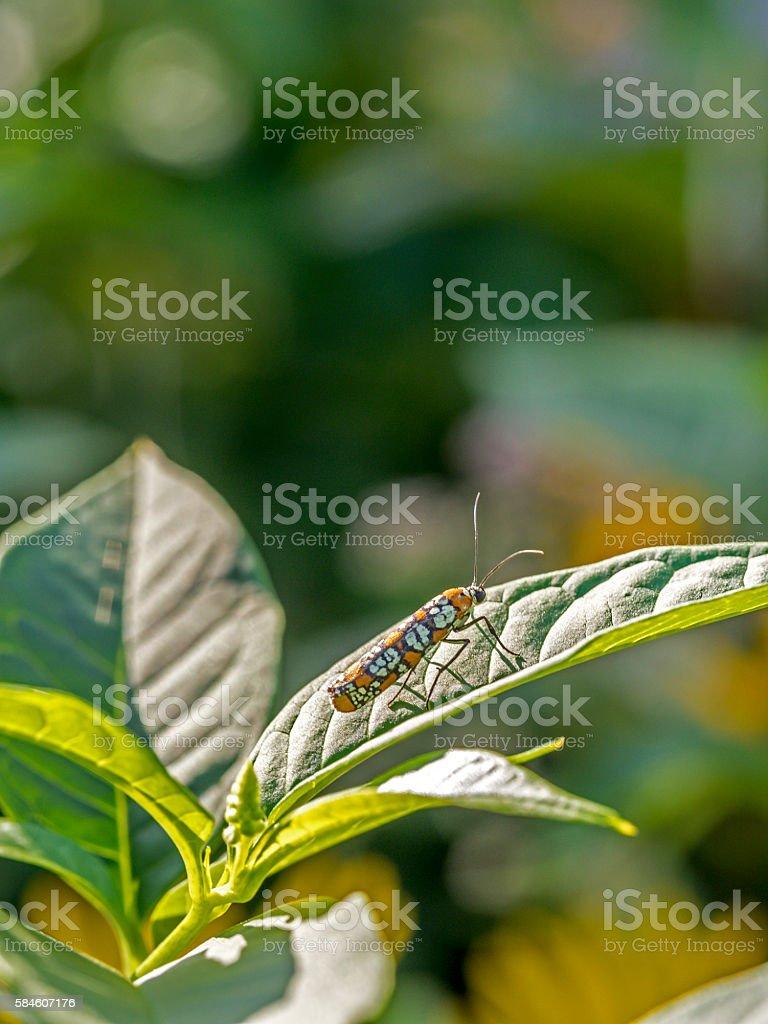 ailanthus webworm in garden stock photo