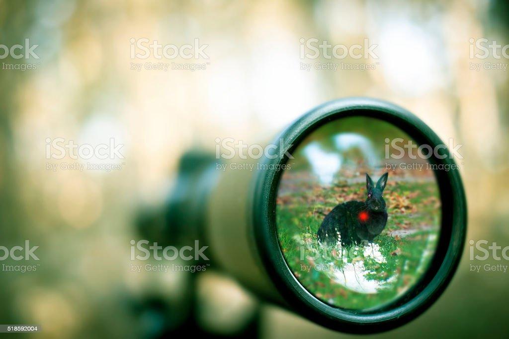 Aiming at a rabbit stock photo