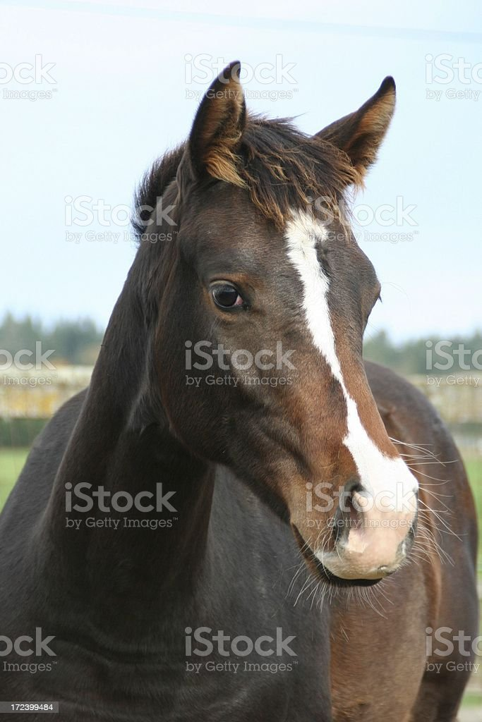 Ain't I Beautiful royalty-free stock photo
