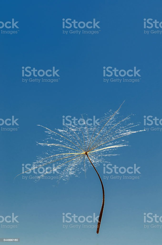 Air dandelion stock photo