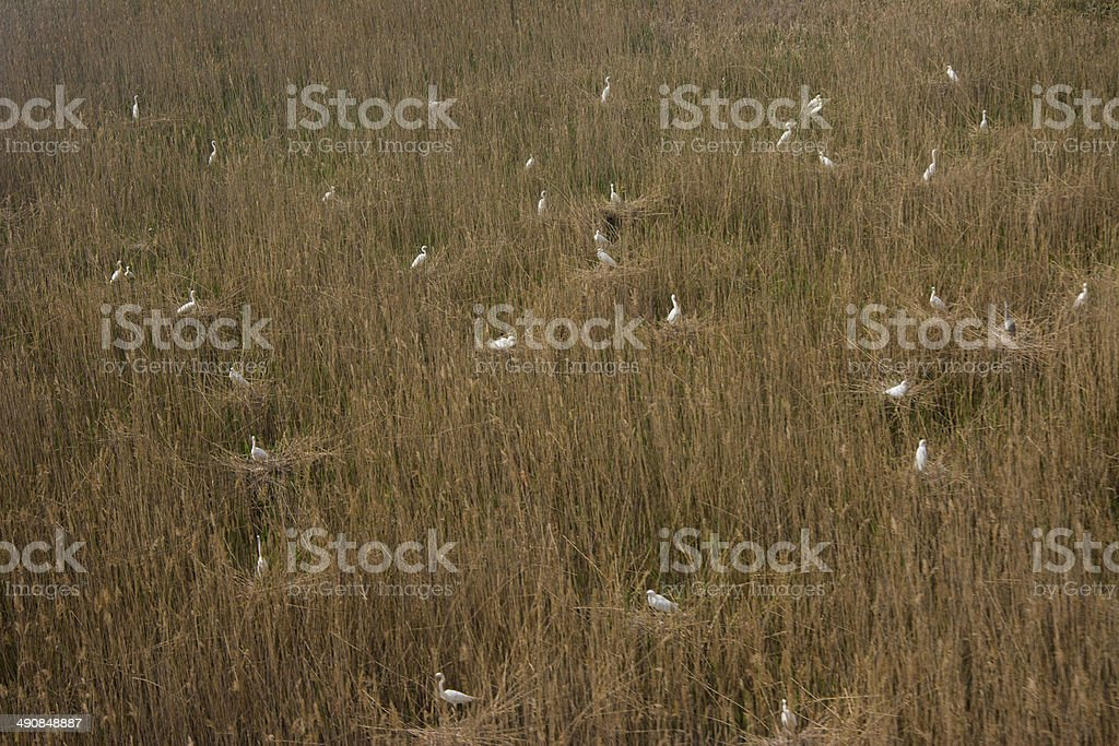 air scape from balloon, view of countryside stock photo