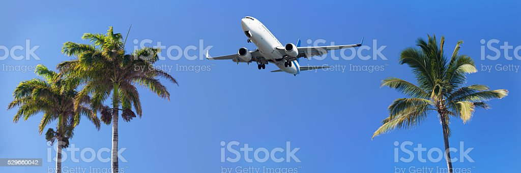 Airliner passing over palm trees before landing stock photo