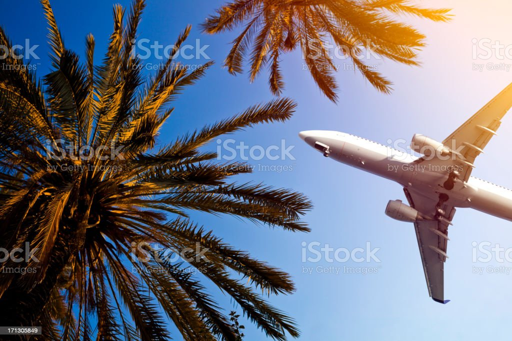 Airliner passing over palm trees stock photo