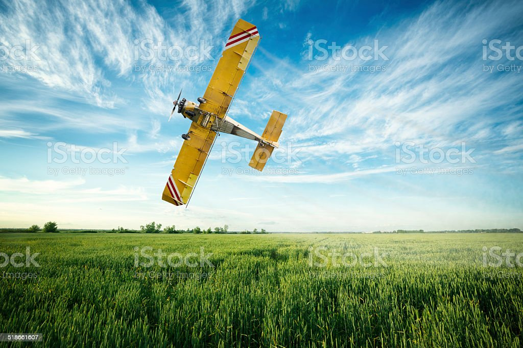 airplane flies over a wheat field spraying fungicide and pestici stock photo