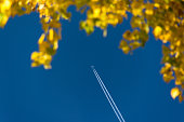 Airplane pulling stripes in blue sky with yellow leaves