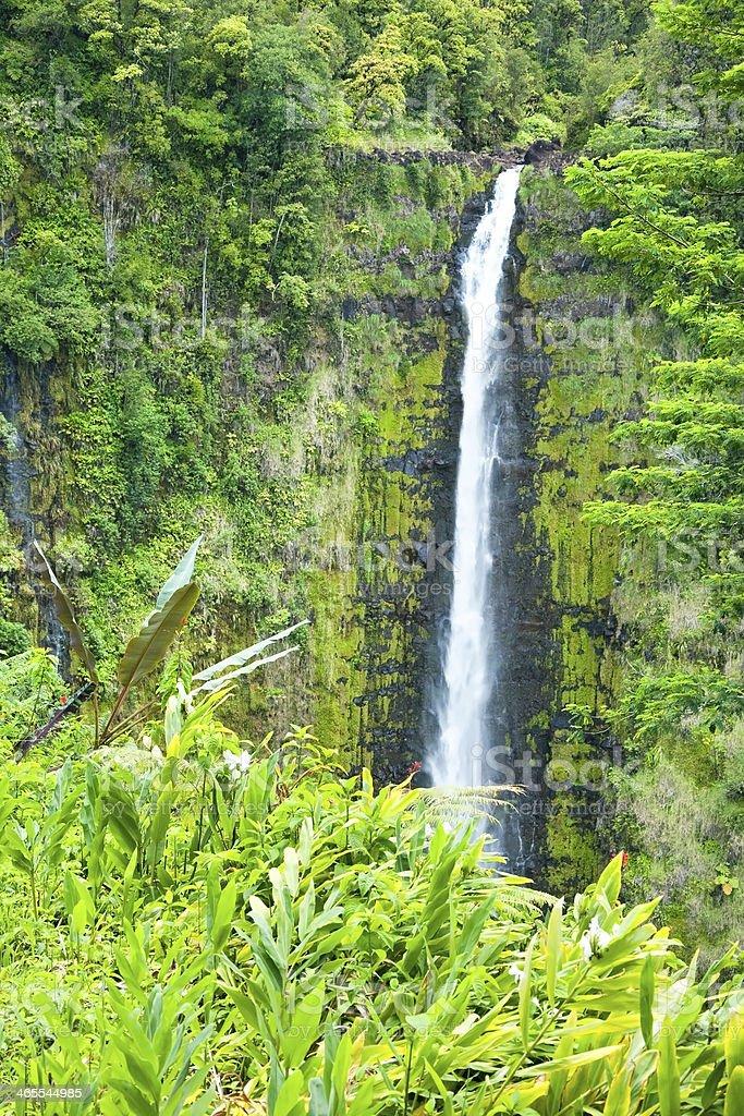 Akaka Falls on Big Island Hawaii in tropical rain fores royalty-free stock photo