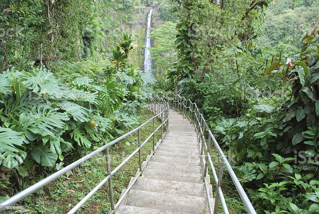 Akaka Falls State Park, Big Island, Hawaii. stock photo